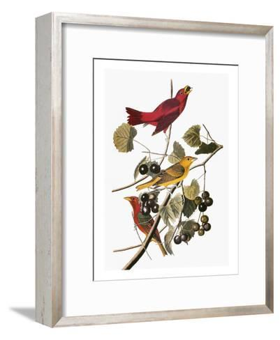 Audubon: Tanager-John James Audubon-Framed Art Print