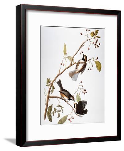 Audubon: Chickadee-John James Audubon-Framed Art Print