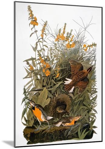Audubon: Meadowlark-John James Audubon-Mounted Giclee Print