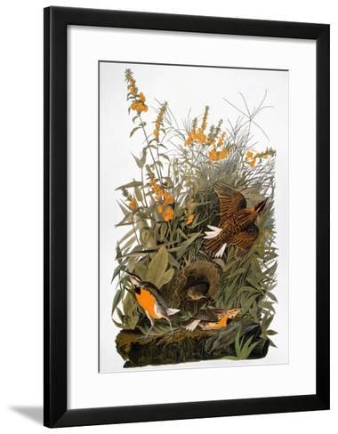 Audubon: Meadowlark-John James Audubon-Framed Art Print