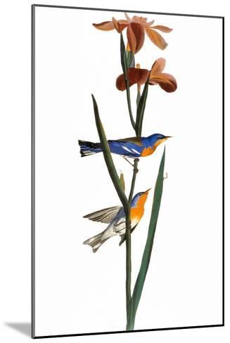 Audubon: Warbler, 1827-John James Audubon-Mounted Giclee Print