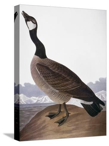 Audubon: Goose, 1827-John James Audubon-Stretched Canvas Print
