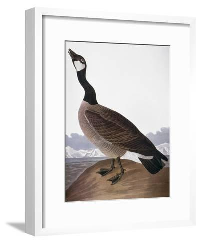 Audubon: Goose, 1827-John James Audubon-Framed Art Print