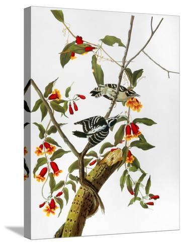 Audubon: Woodpecker, 1827-John James Audubon-Stretched Canvas Print