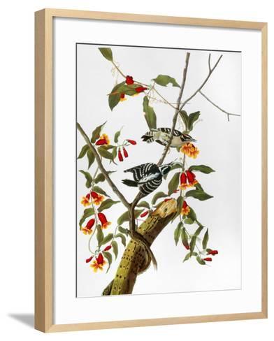 Audubon: Woodpecker, 1827-John James Audubon-Framed Art Print