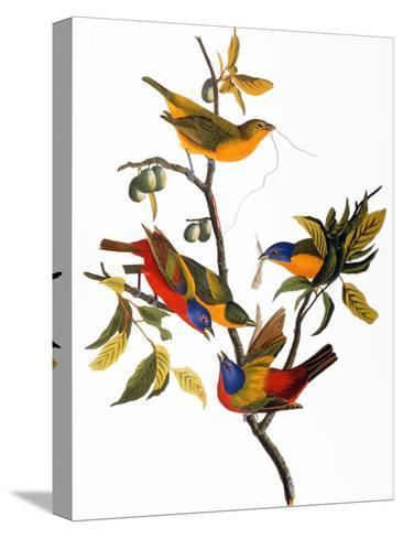 Audubon: Bunting, 1827-John James Audubon-Stretched Canvas Print