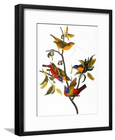 Audubon: Bunting, 1827-John James Audubon-Framed Art Print