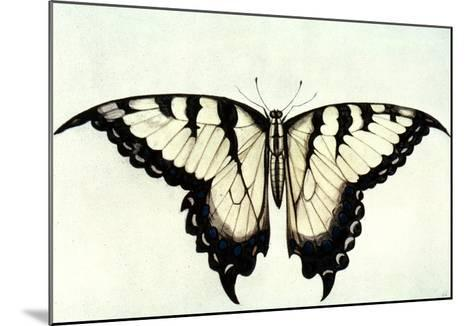 Swallow-Tail Butterfly-John White-Mounted Giclee Print