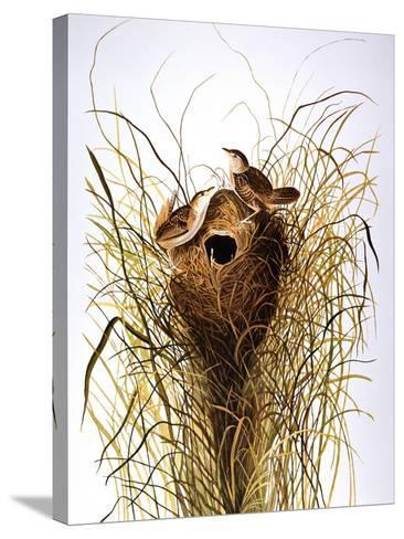 Audubon: Wren-John James Audubon-Stretched Canvas Print