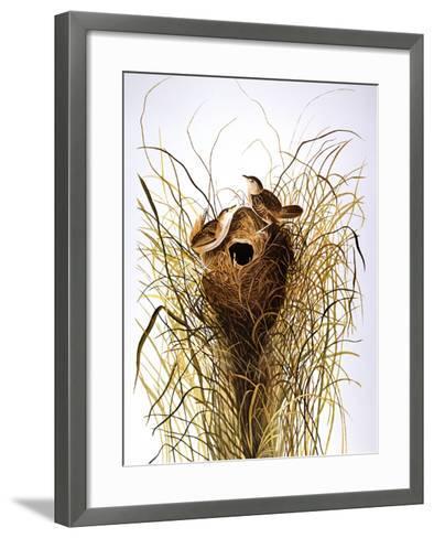 Audubon: Wren-John James Audubon-Framed Art Print