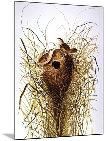 Audubon: Wren-John James Audubon-Mounted Giclee Print