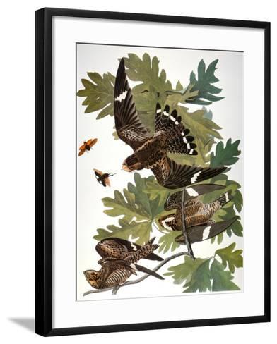 Audubon: Nighthawk-John James Audubon-Framed Art Print