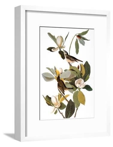 Audubon: Vireo-John James Audubon-Framed Art Print