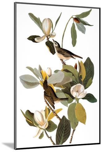 Audubon: Vireo-John James Audubon-Mounted Giclee Print