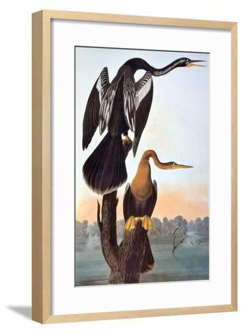 Audubon: Anhinga-John James Audubon-Framed Art Print