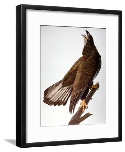 Audubon: Bald Eagle-John James Audubon-Framed Art Print