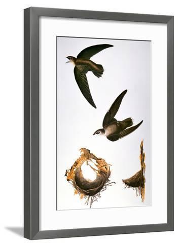 Audubon: Swift-John James Audubon-Framed Art Print