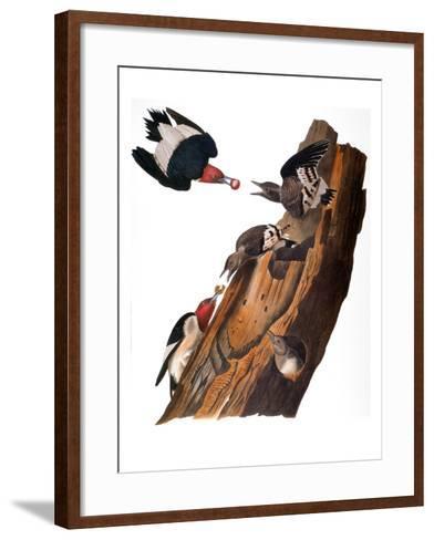 Audubon: Woodpecker-John James Audubon-Framed Art Print