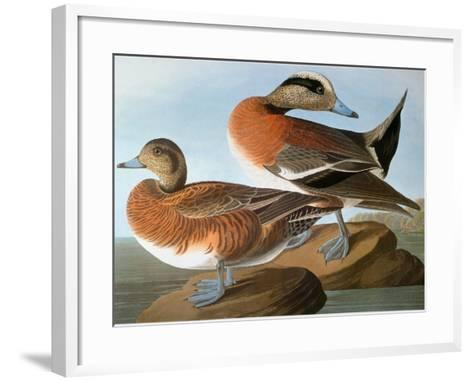 Audubon: Wigeon, 1827-38-John James Audubon-Framed Art Print