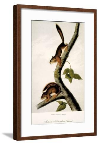 Squirrel--Framed Art Print