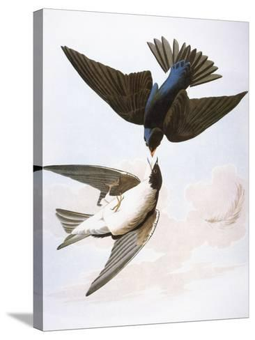 Audubon: Swallows, 1827-38-John James Audubon-Stretched Canvas Print