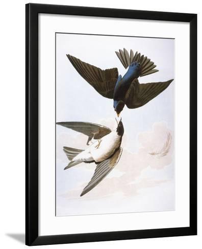 Audubon: Swallows, 1827-38-John James Audubon-Framed Art Print
