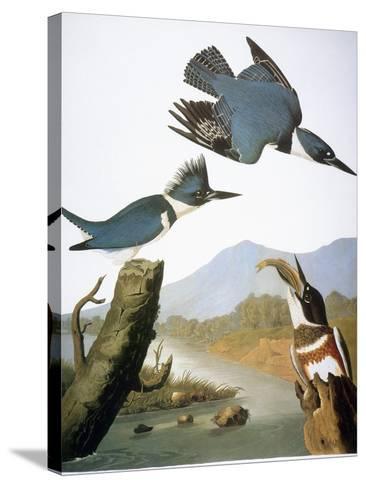 Audubon: Kingfisher, 1827-John James Audubon-Stretched Canvas Print