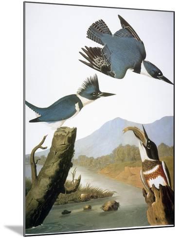 Audubon: Kingfisher, 1827-John James Audubon-Mounted Giclee Print
