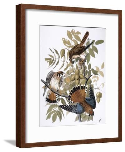 Audubon: Kestrel, 1827-John James Audubon-Framed Art Print