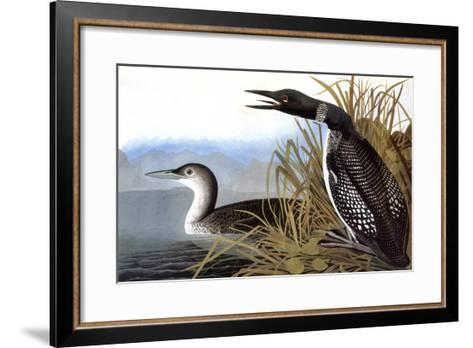 Audubon: Loon, 1827-John James Audubon-Framed Art Print