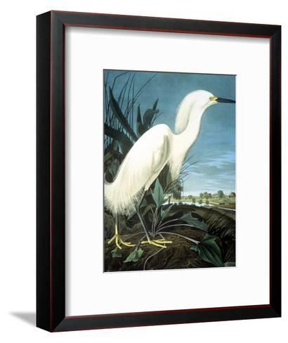 Snowy Heron-John James Audubon-Framed Art Print