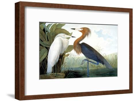 Reddish Egret,-John James Audubon-Framed Art Print