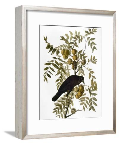 Audubon: Crow-John James Audubon-Framed Art Print