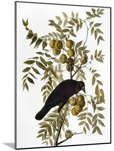 Audubon: Crow-John James Audubon-Mounted Giclee Print