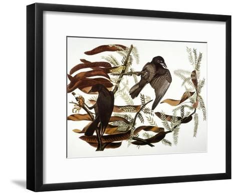 Audubon: Crow-John James Audubon-Framed Art Print