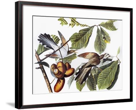 Yellow-Billed Cuckoo-John James Audubon-Framed Art Print