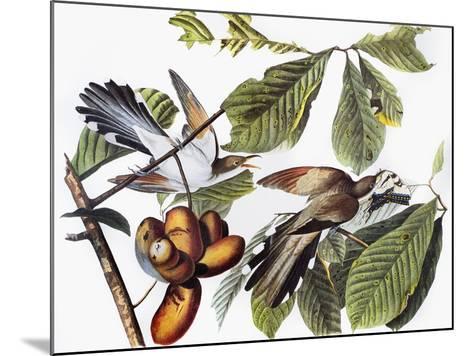 Yellow-Billed Cuckoo-John James Audubon-Mounted Giclee Print