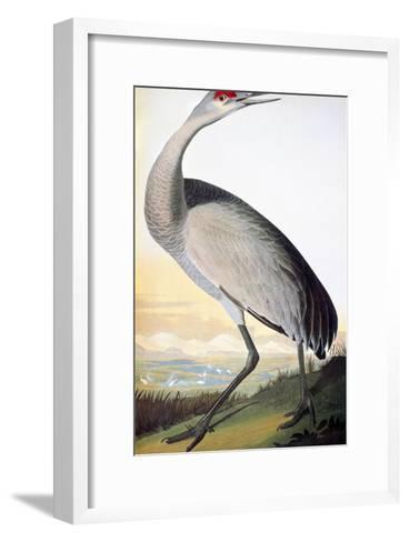 Audubon: Sandhill Crane-John James Audubon-Framed Art Print