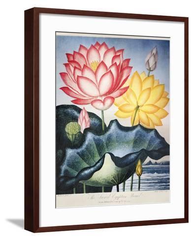 Thornton: Lotus Flower-Thomas Burke-Framed Art Print