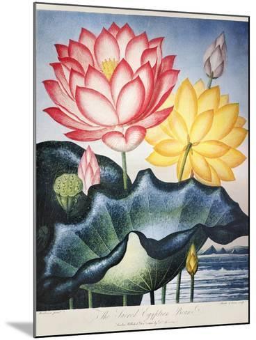 Thornton: Lotus Flower-Thomas Burke-Mounted Giclee Print