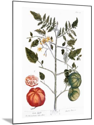 Tomato Plant, 1735-Elizabeth Blackwell-Mounted Giclee Print
