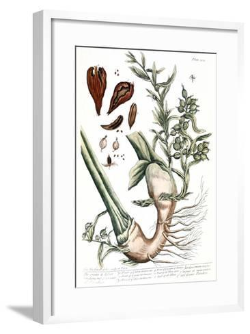 Cardamom, 1735-Elizabeth Blackwell-Framed Art Print