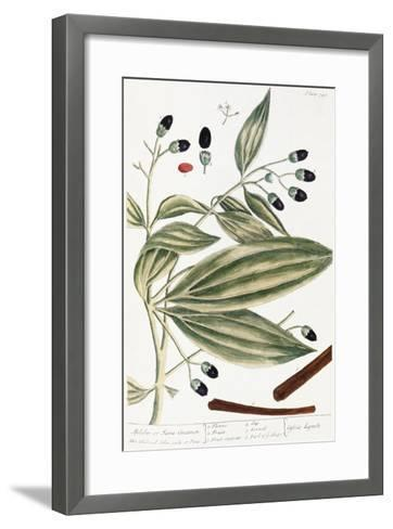 Malabar Cinnamon, 1735-Elizabeth Blackwell-Framed Art Print