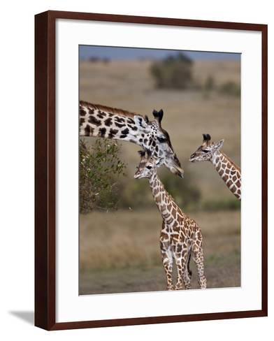 Maasai Giraffe, Masai Mara, Kenya-Joe Restuccia III-Framed Art Print