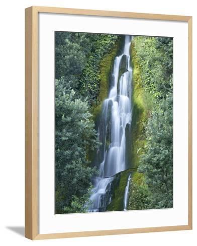 Waterfall, Centennial Gardens, Napier, Hawkes Bay, North Island, New Zealand-David Wall-Framed Art Print