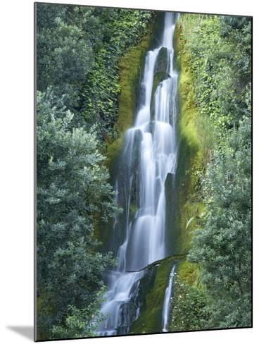Waterfall, Centennial Gardens, Napier, Hawkes Bay, North Island, New Zealand-David Wall-Mounted Photographic Print