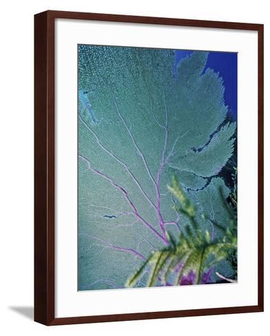 Underwater, Bonaire, Netherlands Antilles-Connie Bransilver-Framed Art Print