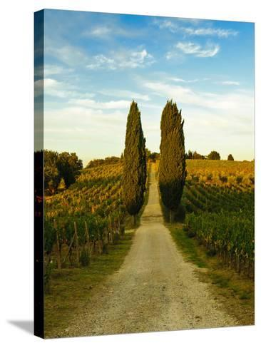 Late Summer Wine Scene in the Hills of Panzano, Tuscany, Italy-Richard Duval-Stretched Canvas Print