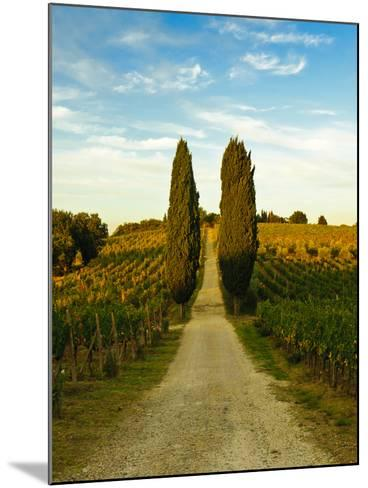 Late Summer Wine Scene in the Hills of Panzano, Tuscany, Italy-Richard Duval-Mounted Photographic Print