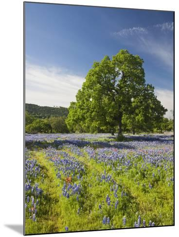 Lone Oak Standing in Field of Wildflowers with Tracks Leading by Tree, Texas Hill Country, Usa-Julie Eggers-Mounted Photographic Print